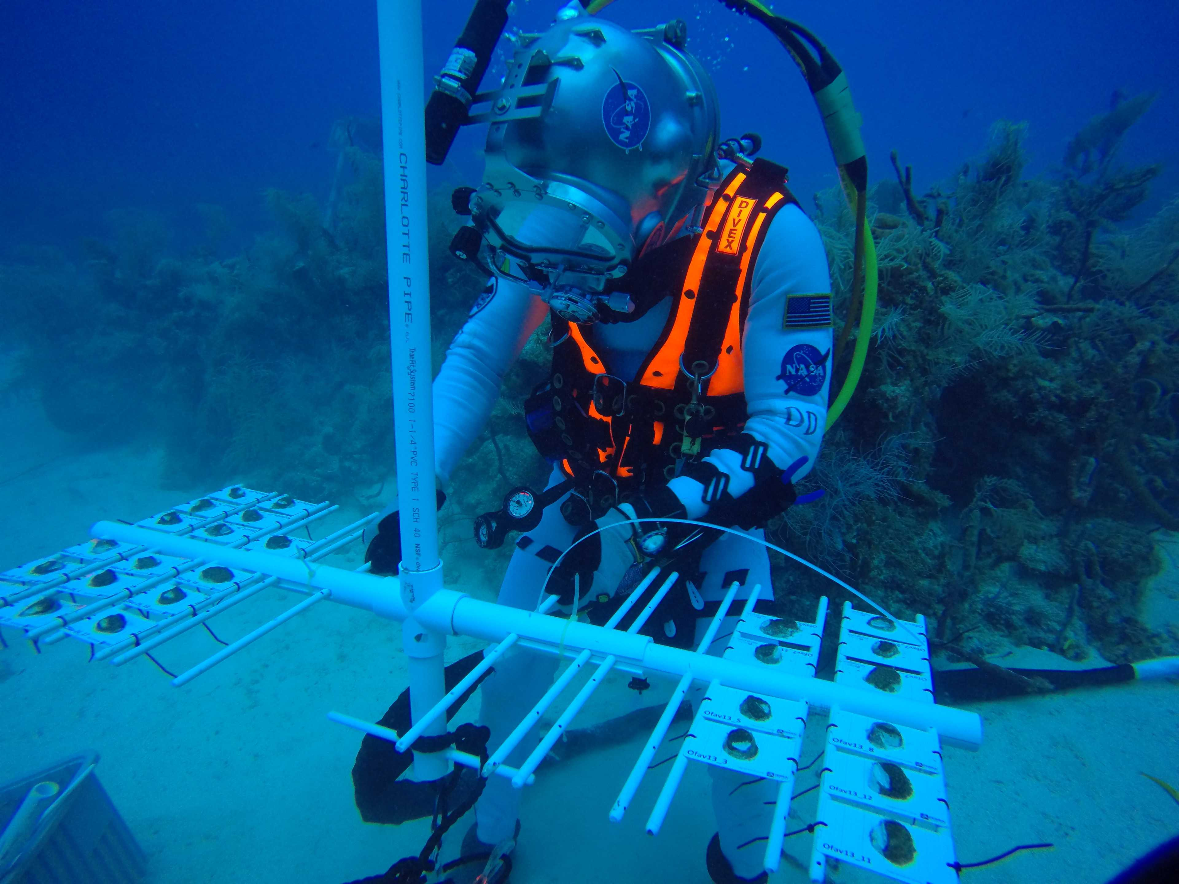 an aquanaut moving coral samples on a PVC pipe rig on a coral reef